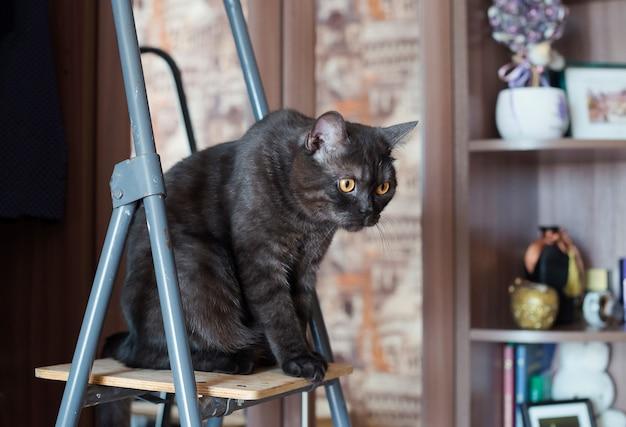 Gato senta-se na escada