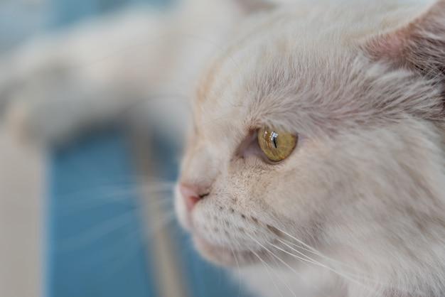 Gato sentado e olhando para algo quando viajar