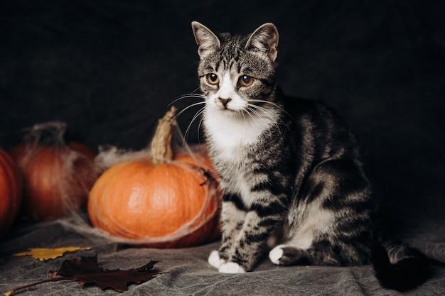 Gato sentado em decorações de halloween