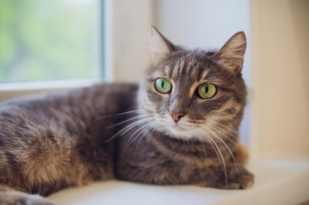 Gato sentado em um peitoril da janela e olhando para a cidade chuvosa. concentre-se nos olhos de um gato.