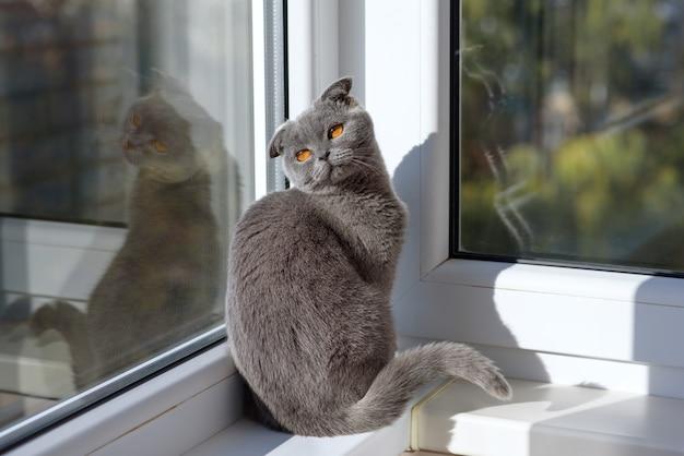 Gato sentado em uma janela em um lenço e olha para longe