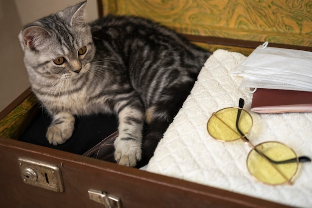 Gato sentado em uma mala de bagagem