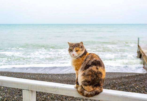 Gato sentado em uma prancha de madeira na costa da praia em frente ao mar em um dia frio e nebuloso