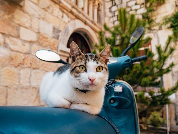 Gato sentado em uma scooter na cidade velha de trogir, perto de split