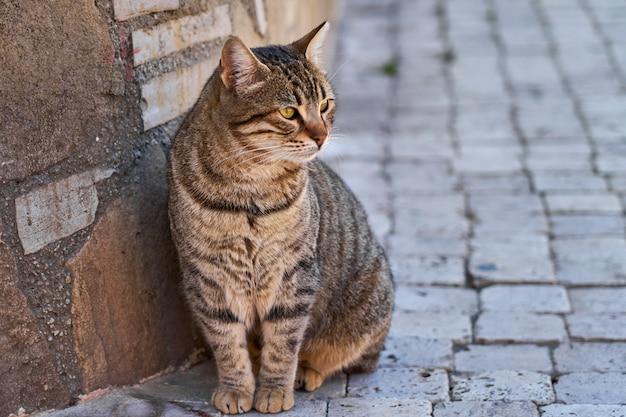Gato sentado em uma velha rua de tijolos