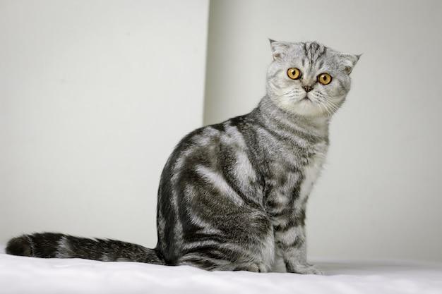 Gato sentado na cama branca no quarto.