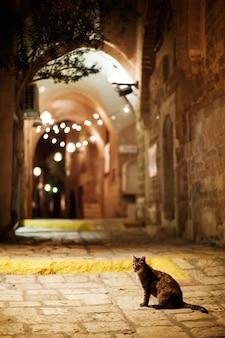 Gato sentado na estrada. cidade velha rua jaffa à noite.