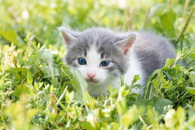Gato sentado na grama no verão