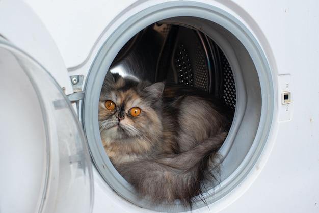 Gato sentado na máquina de lavar roupa