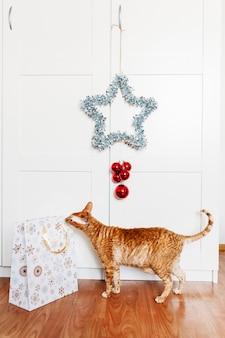 Gato sentado na sala, estrela no ano novo e no natal, decoração da casa no feriado, sacola de presente