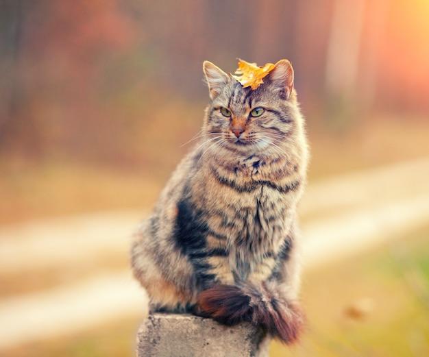 Gato siberiano sentado em um poste de madeira