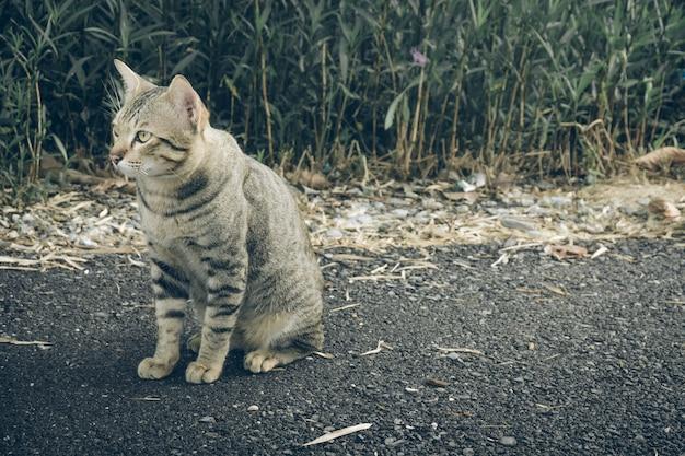 Gato tailandês do cachorrinho que senta-se em um jardim.