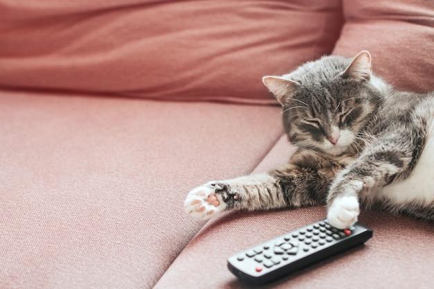 Gato tigrado cinza dorme em um sofá com um espaço de cópia de controle remoto de tv