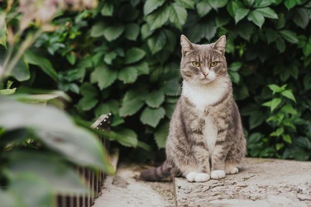 Gato tigrado cinzento está sentado no jardim.