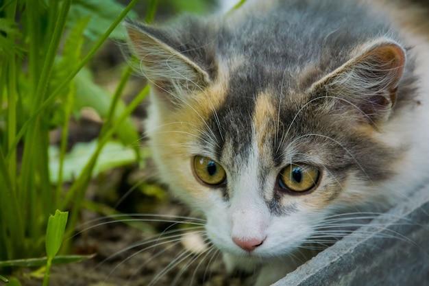 Gato tigrado no jardim