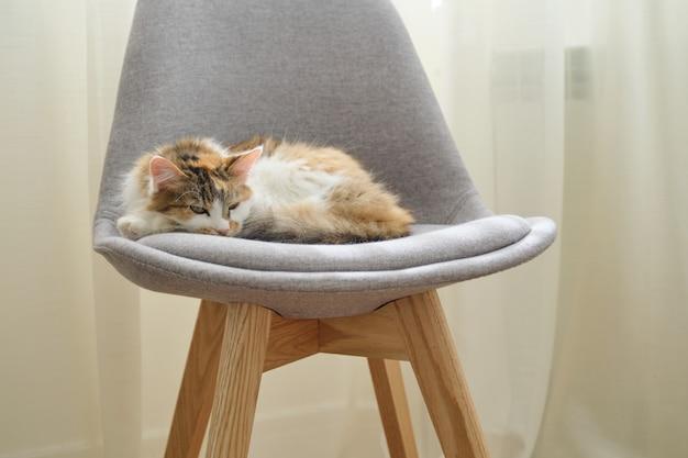 Gato tricolor doméstico dormindo na cadeira perto da janela no quarto