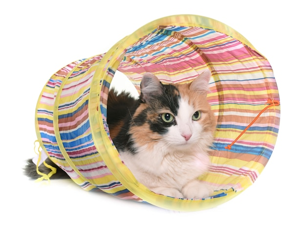 Gato tricolor e túnel