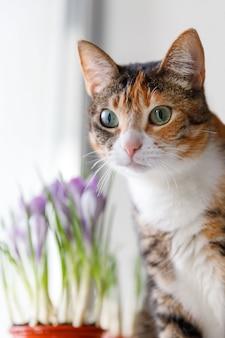 Gato tricolor surpreso com alguma coisa, viu um pássaro na janela