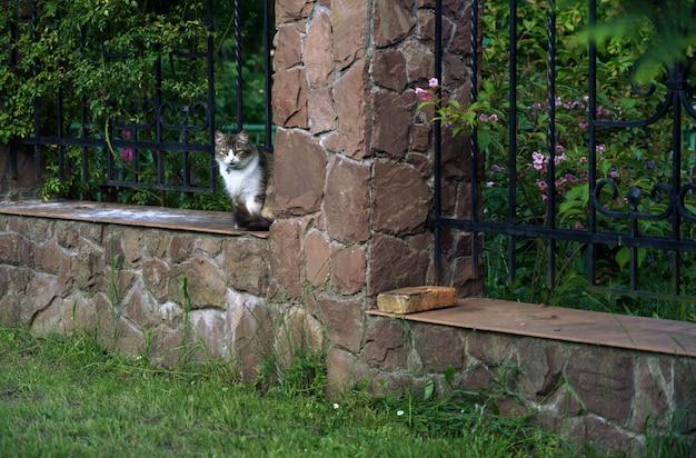 Gato triste sentado na parede de tijolos, olhando para a câmera