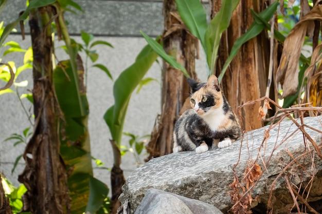 Gato vadio de tartaruga na parede de uma cidade