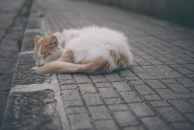 Gato vadio dormindo na rua