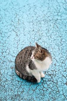 Gato vadio na calçada azul na cidade