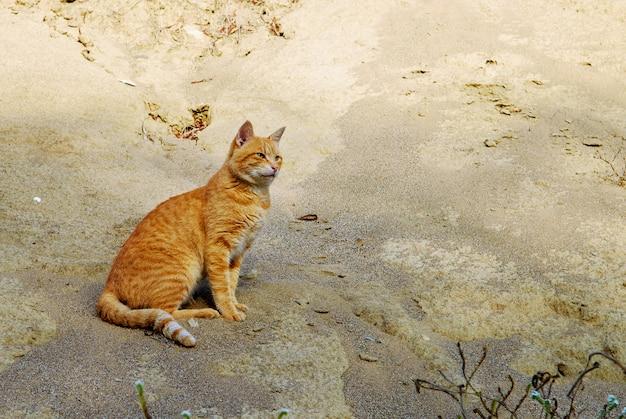 Gato vadio vermelho sentado em uma colina de areia. ache o gato.