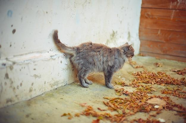 Gato velho se aquecendo ao sol de outono em uma casa de campo