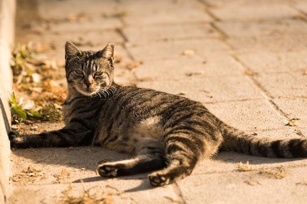 Gato velho sem-teto na rua. gato de rua reastindo no chão.