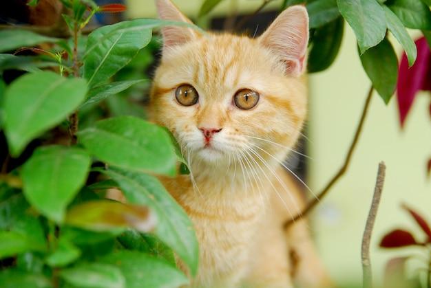 Gato vermelho bonito atrás de uma folha verde