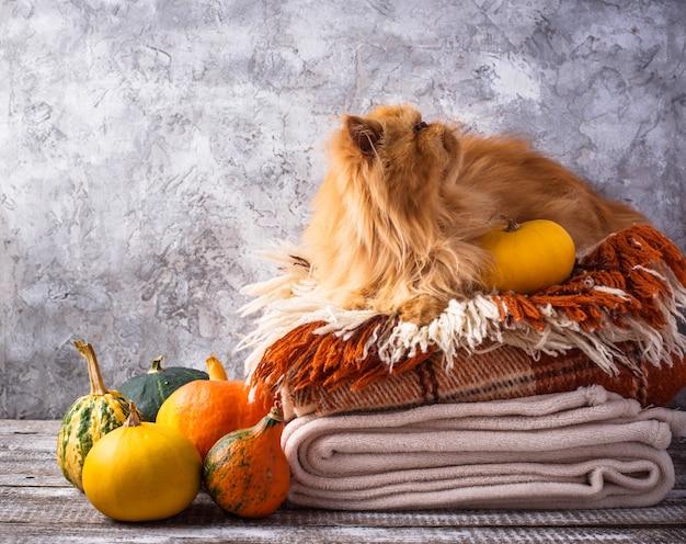 Gato vermelho, deitado sobre uma pilha de mantas