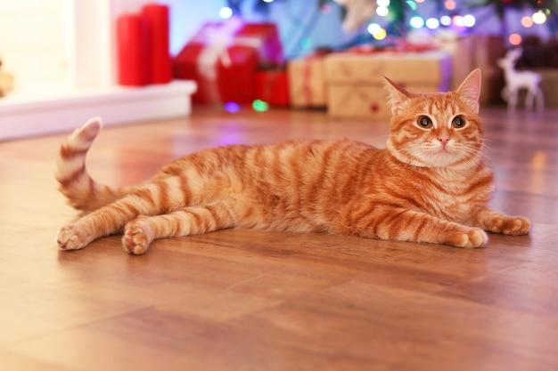 Gato vermelho em casa na época do natal