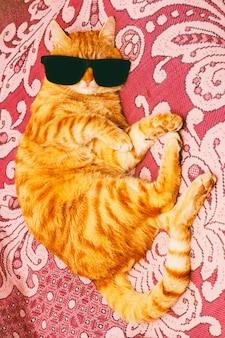 Gato vermelho em óculos escuros deitado no sofá