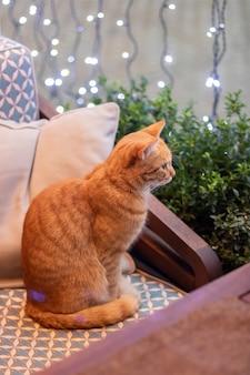 Gato vermelho no café. gato fofo fofo dentro de casa, no interior com luzes.