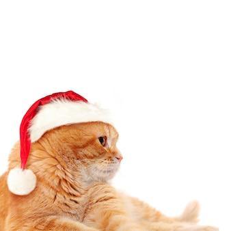 Gato vermelho no chapéu de papai noel em fundo branco. conceito de natal