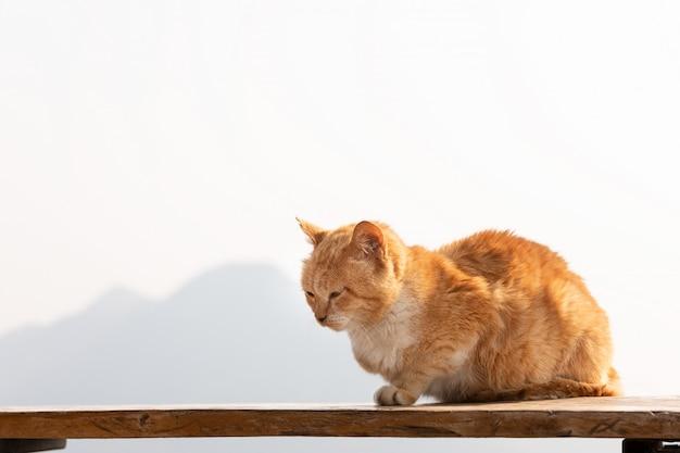 Gato vermelho que toma sol ao sol com fundo da montanha.