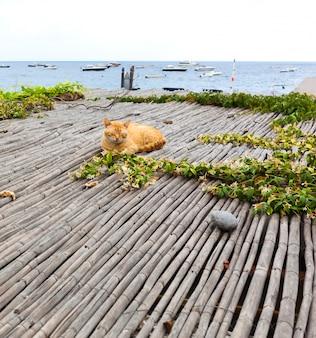 Gato vermelho relaxante perto do mar em positano