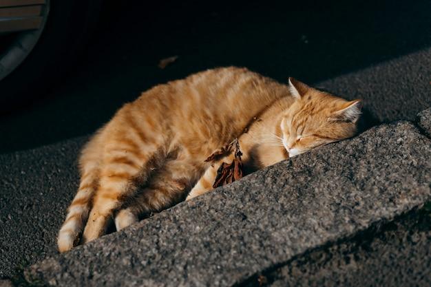 Gato vermelho sem teto deitado na calçada