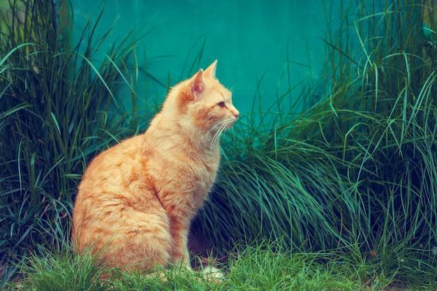 Gato vermelho sentado na grama