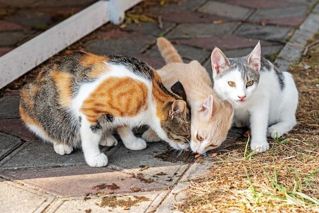 Gatos adoráveis comem lanches deliciosos na rua pavimentada da cidade