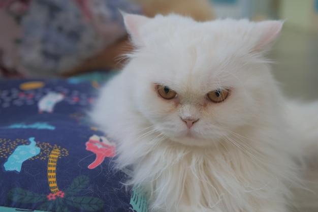 Gatos bonitos no gato café tailândia