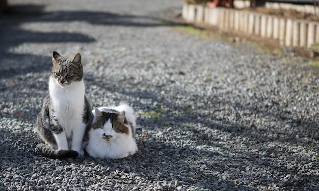 Gatos bonitos que relaxam na manhã em oshino hakkai, japão