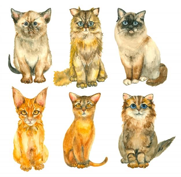 Gatos de aquarela mão desenhada