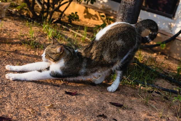 Gatos de rua independentes e preguiçosos.