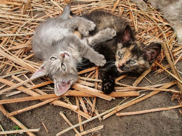 Gatos e campo.