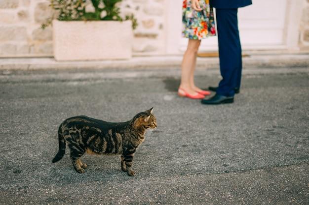 Gatos em montenegro