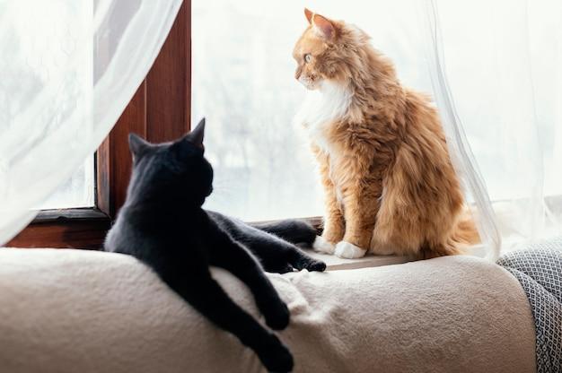 Gatos fofos deitados dentro de casa