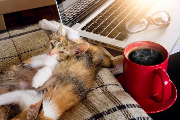 Gatos macios do bebê do sono da imagem e café vermelho do copo com portátil e tabuleta na tabela preta.