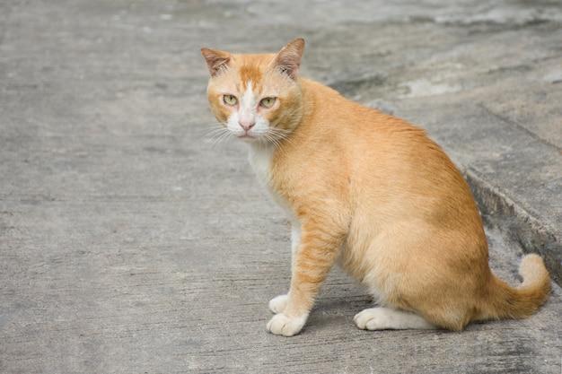 Gatos marrons gordos que sentam-se no pavimento.