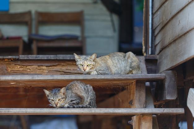 Gatos nas escadas